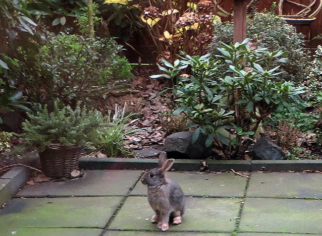 Konijn in de tuin!