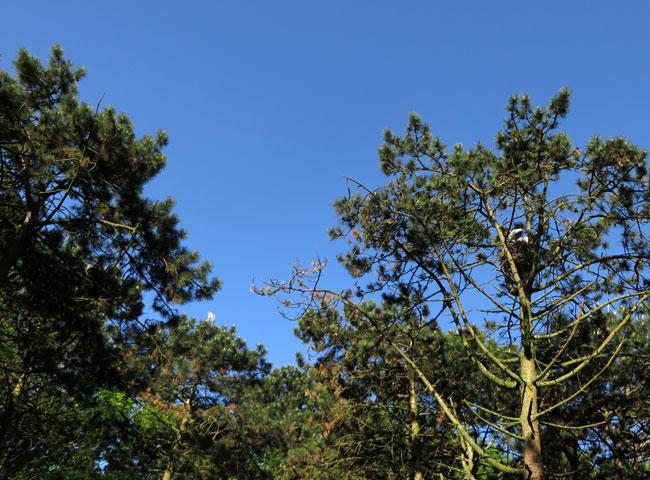 Reiger en lepelaars in het 'reigersbos' van Sloterpark Amsterdam Nieuw-West