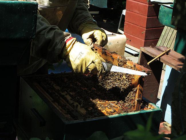 bijen-bijenpark-geuzenveld-1