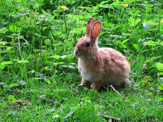 Het oranje WK konijn in het Sloterpark leeft nog!