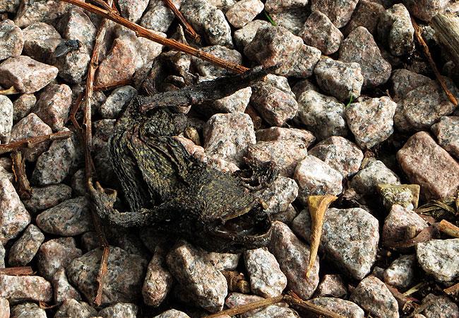 Lijk in Sloterpark - Stoffelijk overschot blijkt (bekende?) kikker te zijn