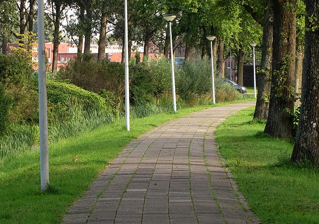 Ontmoeting groene specht tijdens wandeling