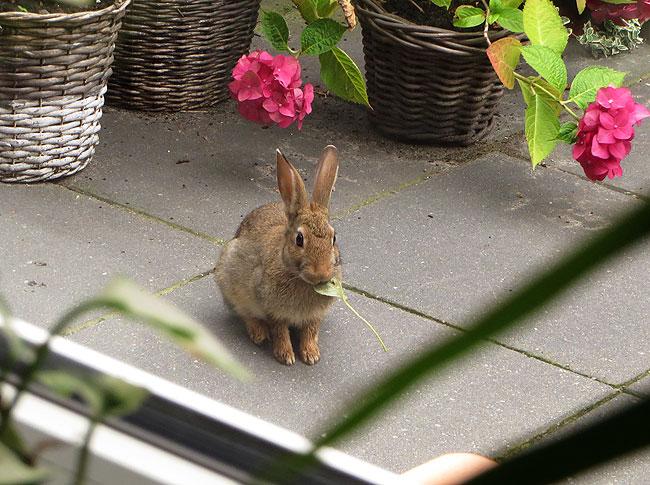 konijn-tuin-2