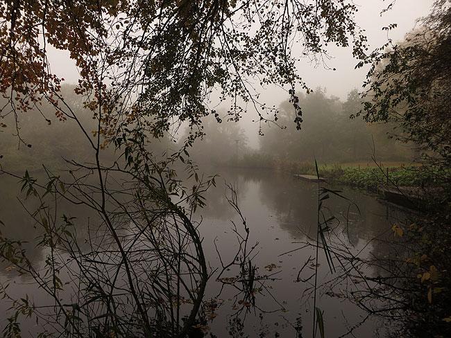 herfstwandeling-sloterpark-mist-13-heemtuin