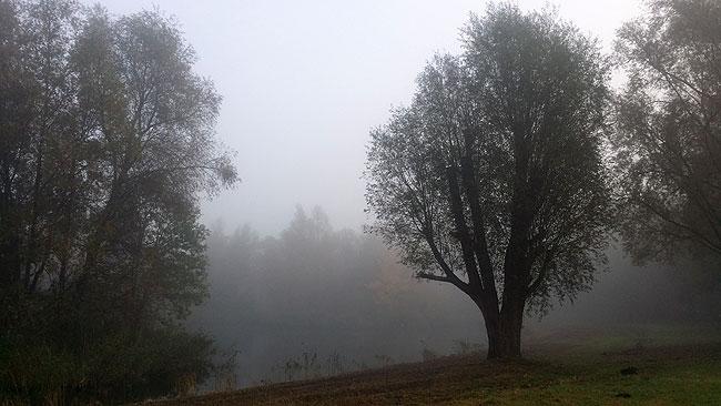 Het 'hondenstrandje' van het Sloterpark in de mist