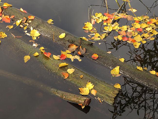 Prachtig, die gele en rode bladeren op het watervlak. Herfst, wat ben je mooi!