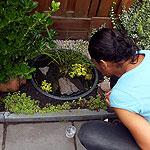 Waterbeestjes in minivijver in stadstuin - creëer je eigen stadsnatuur