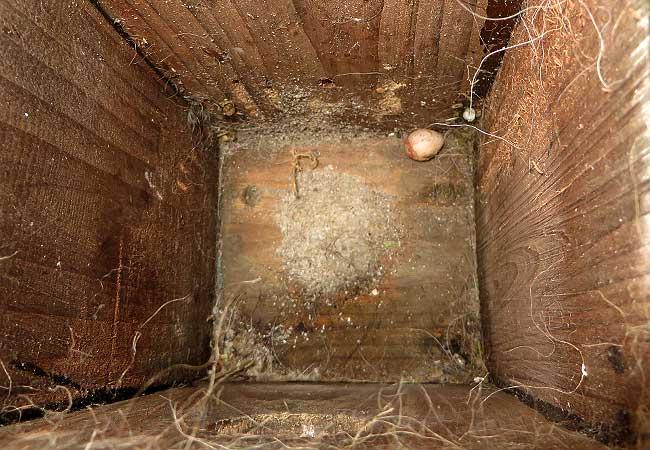 In de inmiddels lege nestkast rolde nog een niet-uitgekomen eitje