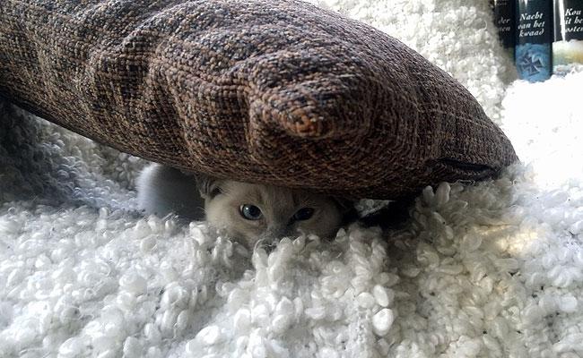 Ook kleine katjes balen wel eens...