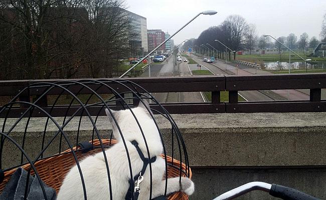 Uitzicht vanaf de brug over de Allendelaan
