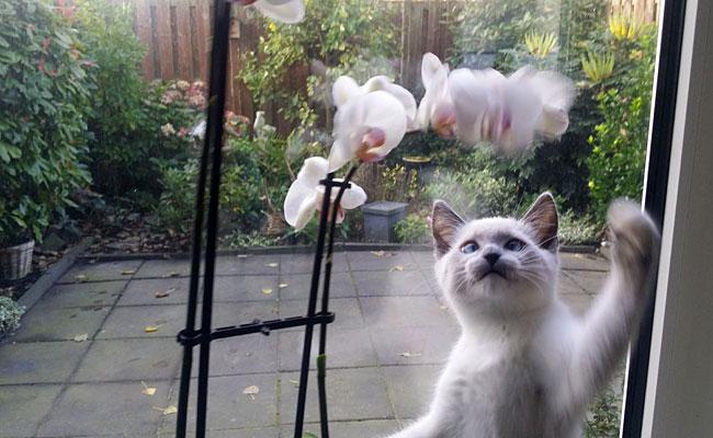 Kitten Disney neemt orchidee onder handen.