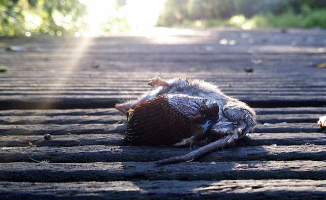 Dode spitsmuis met slak in zonnestraal