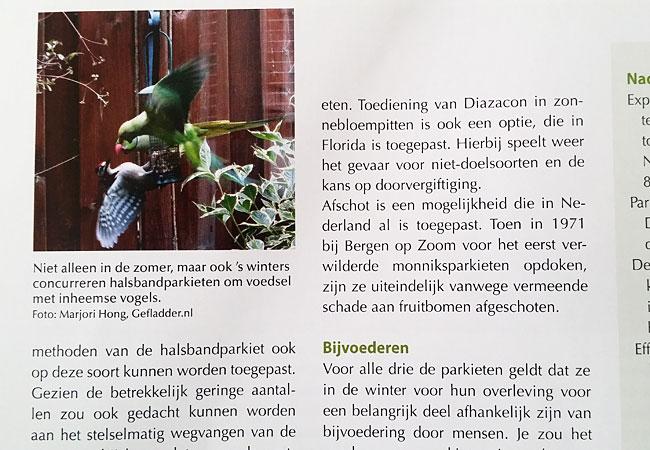 Foto Gefladder.nl in KAD Magazine