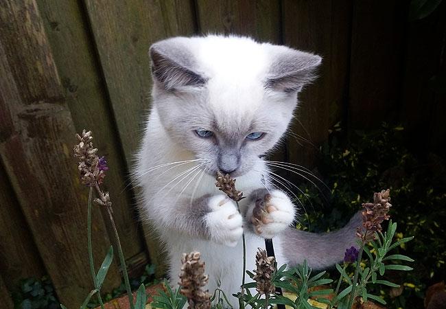 Kitten Disney houdt echt van de lavendel