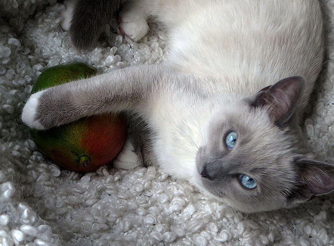Don't touch my mango!
