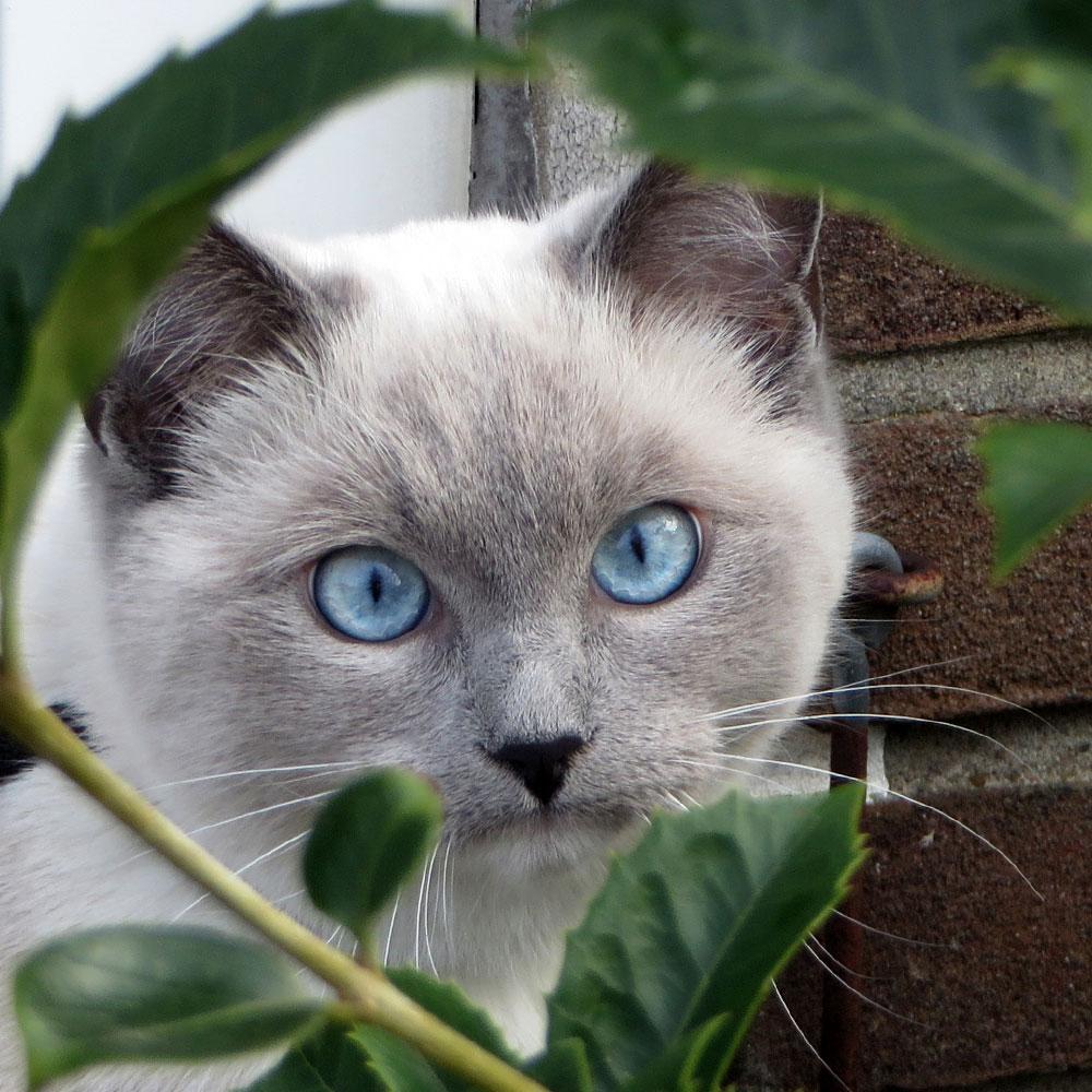 Kitten Disney kijkt haar ogen uit in de tuin