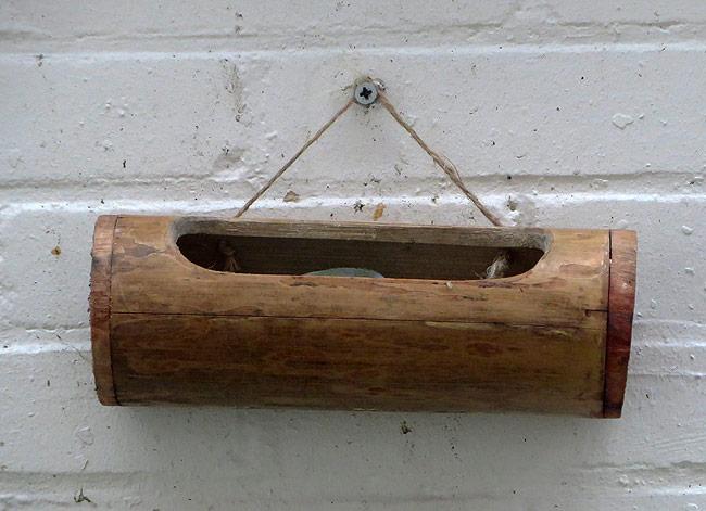 Pimpelmees ontdekt lekker plekje van koolmees (zonnebloempitten)