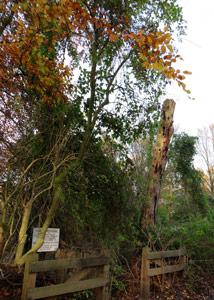 Naast een van de ingangen van Heemtuin Sloterpark staat een dode boom die nog altijd veel bezoekers heeft
