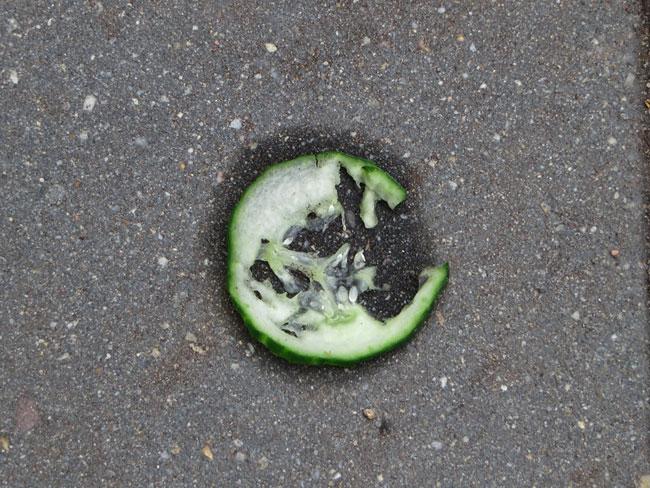 Schijf komkommer die in de bak kikkervisjes hoort te liggen, ligt op de tegels