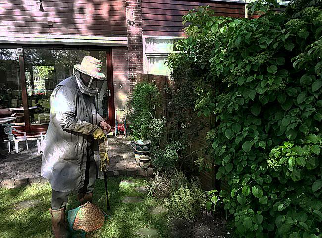 Imker komt voor zwerm bijen - foto: Liane Zoeter