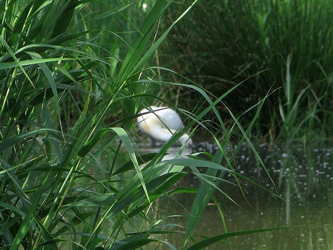 foeragerende-lepelaar-sloterplas-05062015-1
