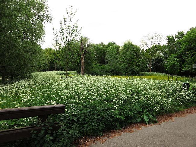 Volop fluitenkruid en boterbloemen op weg naar de plek waar het WK konijn leeft