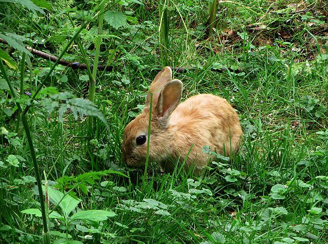Het WK-konijn tijdens een festival in het Sloterpark
