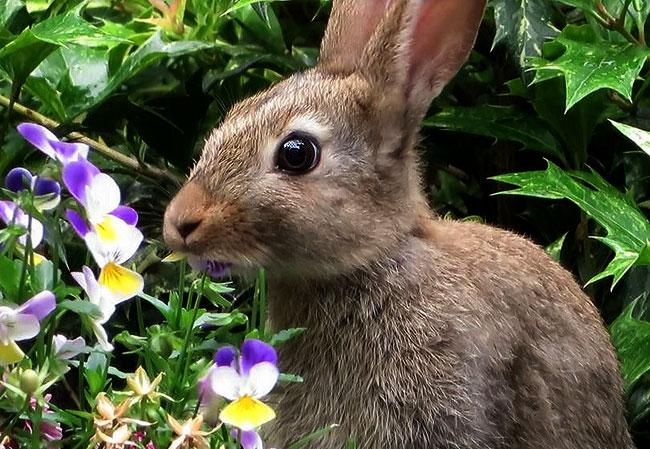 Konijn eet met smaak van de viooltjes in de tuin