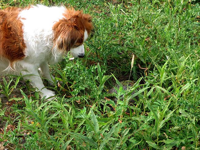 Hond Saartje van Ans Schlebaum vind het maar raar, een bewegende steen?