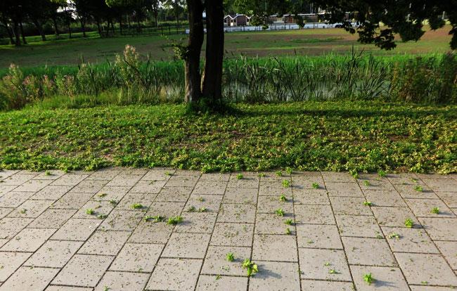 Ditjes en datjes, takjes en bolletjes uit de boom