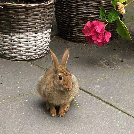 konijn-tuin-3