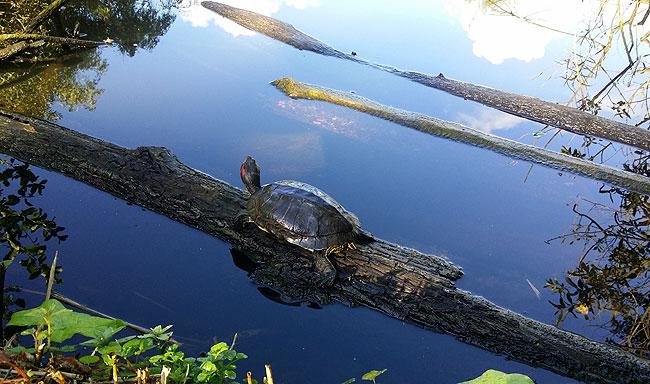 Schildpad geniet van najaarszonnetje in Heemtuin Sloterpark