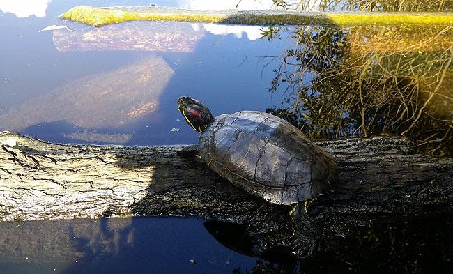 schildpad-heemtuin-3