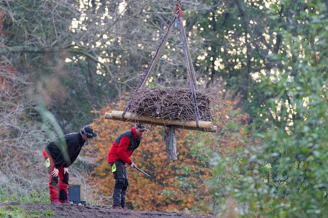 Ooievaarsnest Vondelpark wordt verwijderd (om te worden vervangen)