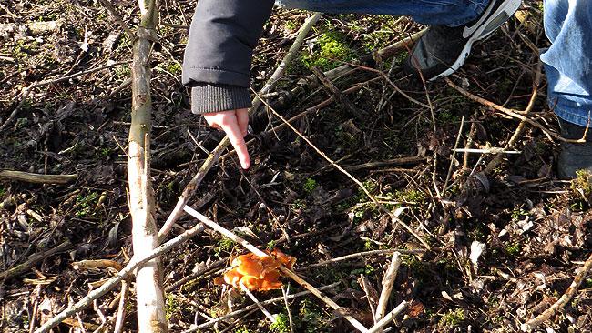 Kelvin had een vreemde rubber-/puddingachtige paddenstoel ontdekt
