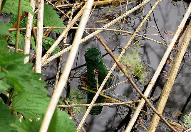 Een biertje slaan de moerasschildpadden niet over
