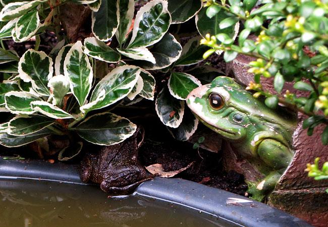 Kikker en kikker bij de minivijver