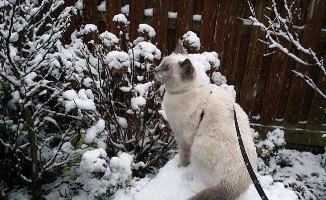 Kitten Disney's eerste keer in de sneeuw