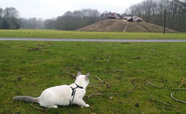 Kitten Disney ziet de heuvel met kunstwerk Groot Landschap