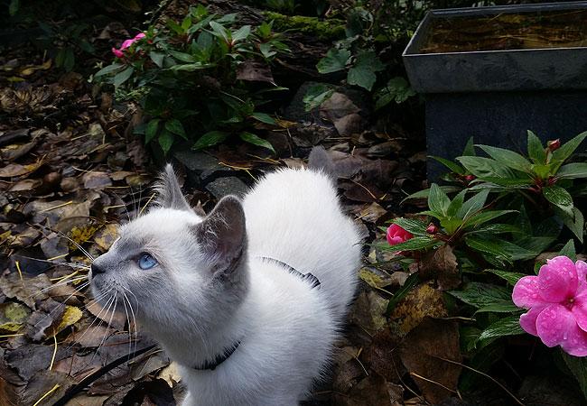 Kitten Disney ruikt de geur van natte bladeren