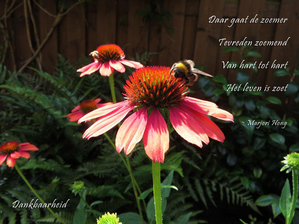 Dankbaarheid - Tevreden zoemer