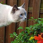 Mediteren in de tuin zonder kattenkwaad