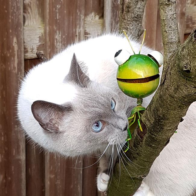 Kat en krekel zijn uit op kattekwaad! - BFF's