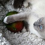 Kitten Disney gek op mango