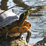 Ook Pasen bij de schildpadden langs het Ruige Riet