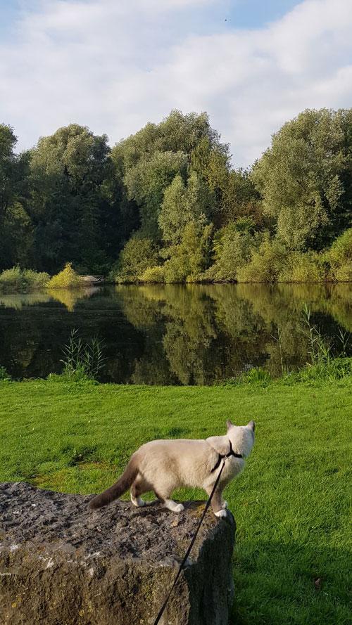 Disney bij het water voor De Drijfsijs - Ruige Riet/Heemtuin Sloterpark